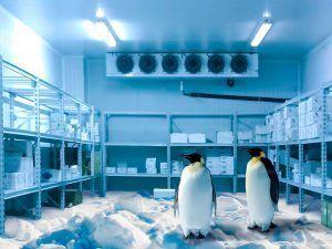 Frio industrial en Granada frio-industrial01-300x225